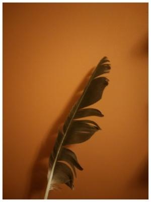 eagle-feather-628895-edited.jpg