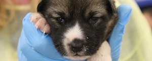 ont-spca-year-of-the-northern-dog