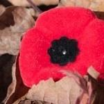 poppy-150x150-4.jpg
